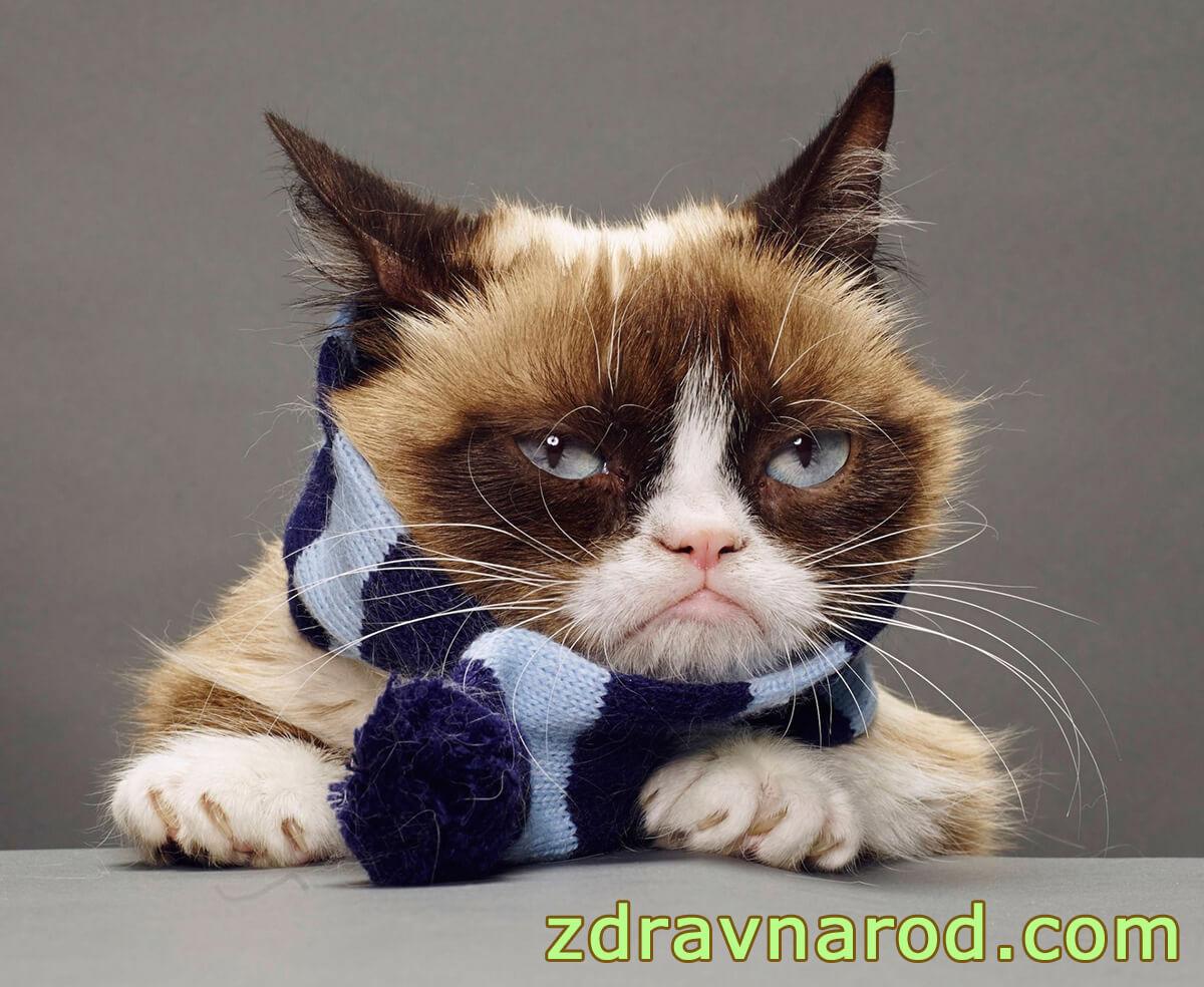 Фарингит у кошки