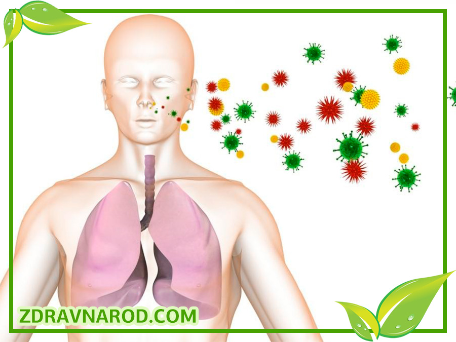 Как попадает вирус кори в человека