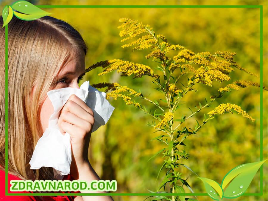 Аллергия на пыльцу растений - фото