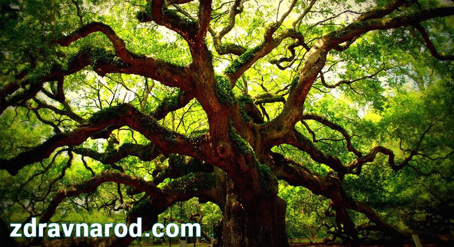 Дендротерапия — метод исцеления с помощью деревьев